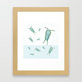 Z is for Zooplankton Framed Art Print