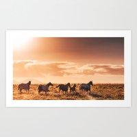 wild horses in australia Art Print