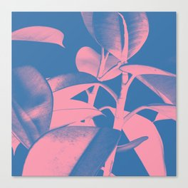 Rubber Plant pink and blue Canvas Print