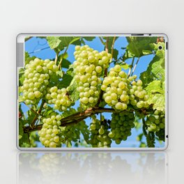 Delicious growing green grapes bunch farming on a beautiful blue summer sky background Laptop & iPad Skin