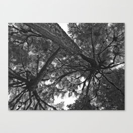 Life in silhouet Canvas Print