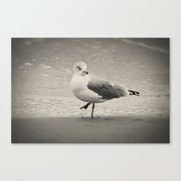 Beach Bird Canvas Print