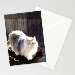 The Beautiful Maine Coon Dilute Calico Stationery Cards