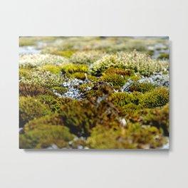 moss land Metal Print