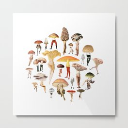 Mushroom Amy Ross Metal Print