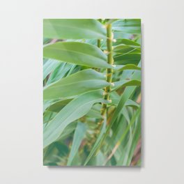 Giant Canes Metal Print