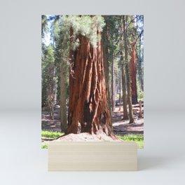 Redwood Mini Art Print