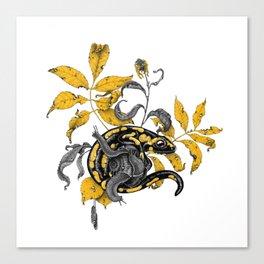 Salamander and Snails Canvas Print