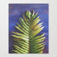 fern Canvas Prints featuring Fern by Olivia Joy StClaire