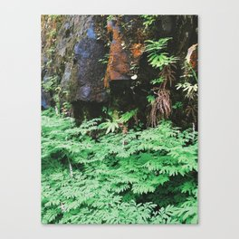 Forest Rock Canvas Print