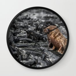 Baby sea lions surrounded by marine iguanas Galapagos Wall Clock