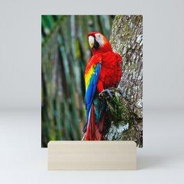Scarlet Macaw Bird Costa Rica Mini Art Print