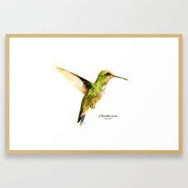 Hummingbird I Framed Art Print
