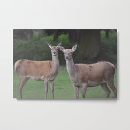 Deer Duo Metal Print