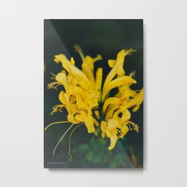 Beautiful yellow flower on black background - Botanical Photography #Society6 Metal Print