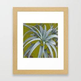 GRACEFUL GREY SUCCULENT GARDEN PLANT MODERN ART Framed Art Print