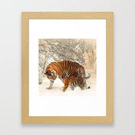 Tiger_2015_0126 Framed Art Print