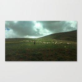 Sheep Herder, Morocco Canvas Print