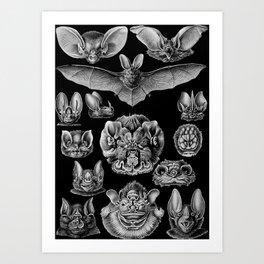 1904 Haeckel Chiroptera Art Print