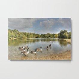 Geese on the Lake HDR Metal Print