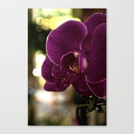Huntington Orchid Canvas Print