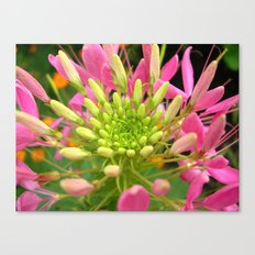 beauty bloom Canvas Print