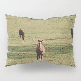 Field of Horses in Ireland  Pillow Sham