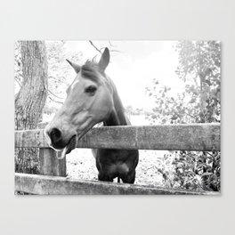 Cheeky Horse Canvas Print