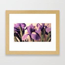 Soft Iris Framed Art Print