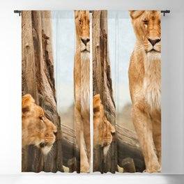 Two Gracious Beautiful Female African Lions Close Up Ultra HD Blackout Curtain