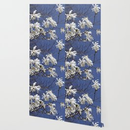 Star filled sky (Star Magnolia flowers!)      Edit Wallpaper