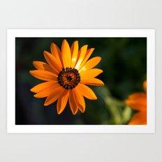 Vibrant Orange Flower Art Print