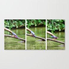 Costa Rican Rain Forest - Bird Canvas Print