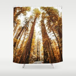 red woods forest in california Shower Curtain