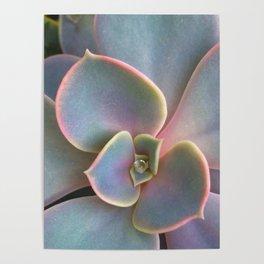 Succulent Dew Drop Poster