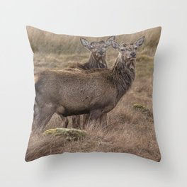 A pair of beautiful wild Stags in the Scottish highlands Throw Pillow