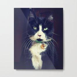 A Cats Life Metal Print