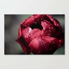 Tulip Close Canvas Print