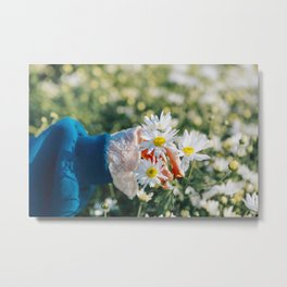 Daisy flower,, Asteraceae flower,  daisy hill, Photography, beautiful view Metal Print