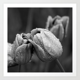 Tulips In Drops Art Print