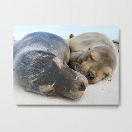 Snoozing Sea Lions Metal Print