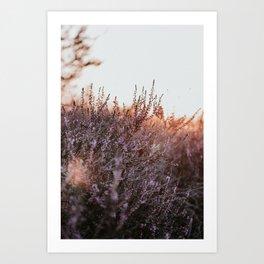 Dutch purple heather at sunset | Colourful Travel Photography | Veluwe, Holland (The Netherlands) Art Print