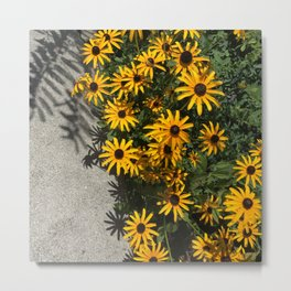 Susans and Cement Metal Print