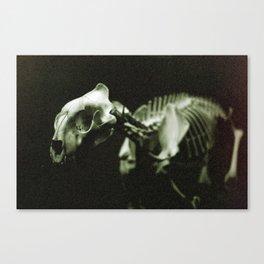 Film | Natural History Canvas Print