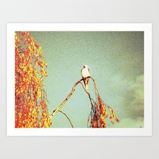 KITE HAWK Art Print
