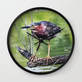 Green Heron in the channel Wall Clock