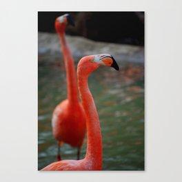 Flamingo Mingo Canvas Print