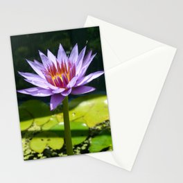 Nymphaea 'Rhonda Kay' II Stationery Cards