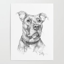 """Hank"" the Rescue Blue Nose Pitbull Staffordshire Terrier Poster"