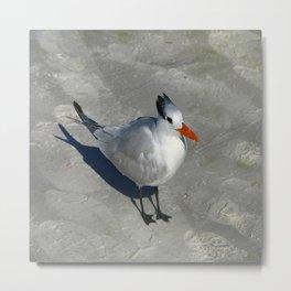 Siesta Key Tern Metal Print